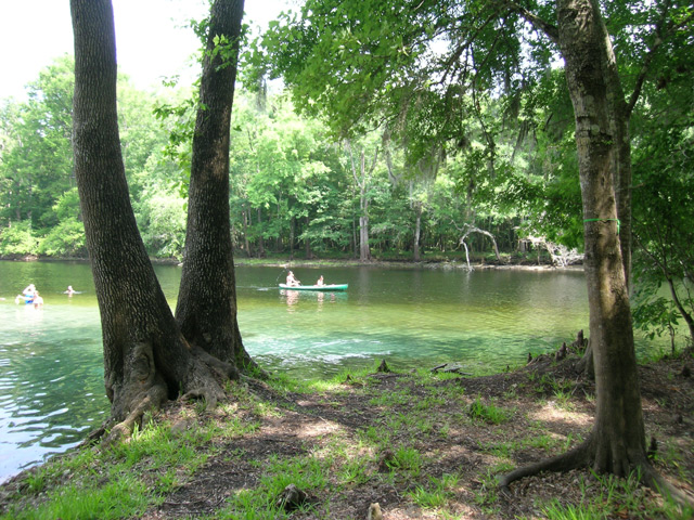 Just Down River From Rum Island Springs Is Blue Springs, A 10 Minute  Paddle, Then Ginny Springs, July Springs And Other Small Springs. See The  River Map.